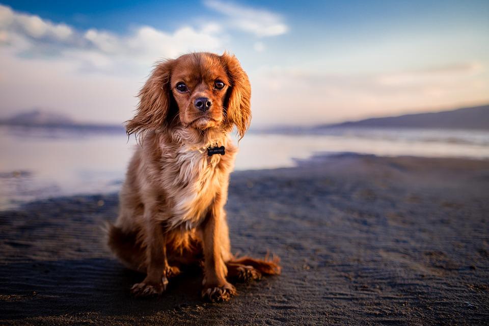 Le vermifuge pour chien, qu'est ce que c'est ?